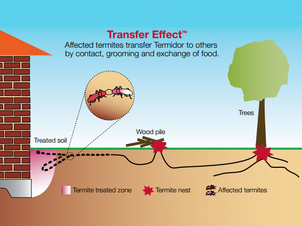 Illustration of the Termidor Transfer Effect, by which termites basically poison each other by spreading the termiticide to their colony mates when they touch each other